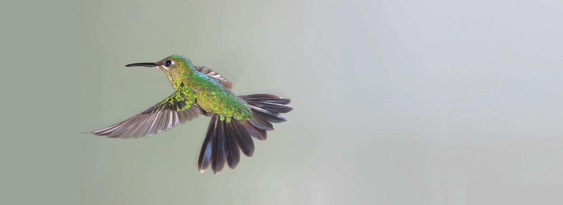 slide6_colibri2
